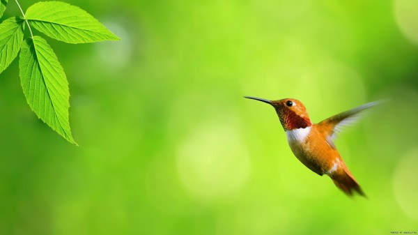 birds-wallpaper-20-photos- (12)