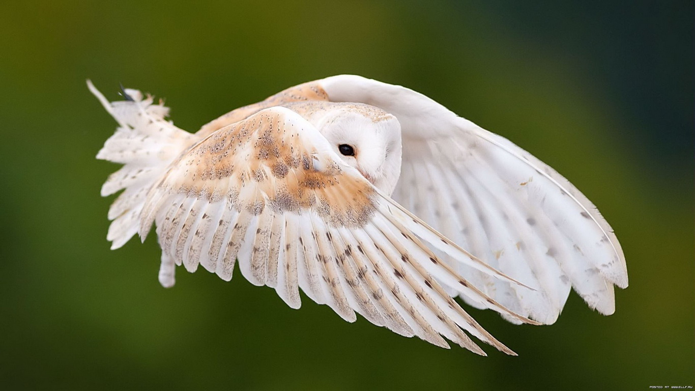 beautiful birds wallpaper (20 photos) | funmag