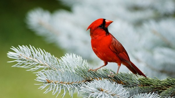 birds-wallpaper-20-photos- (7)