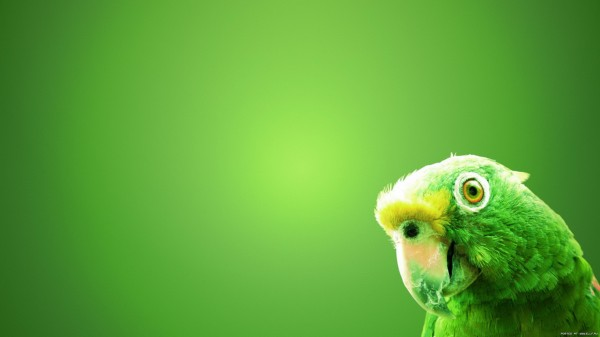 birds-wallpaper-20-photos- (8)