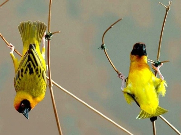 funny-birds-40-photos- (34)