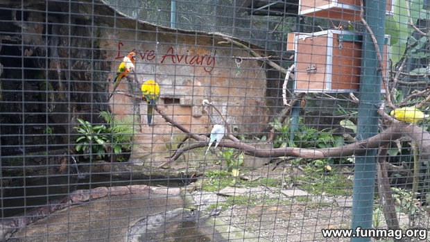 kl-bird-park-best-things-to-see-in-kuala-lumpur- (2)