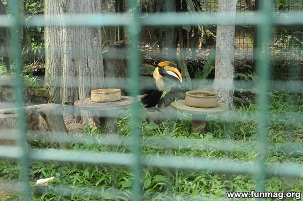 kl-bird-park-best-things-to-see-in-kuala-lumpur- (25)