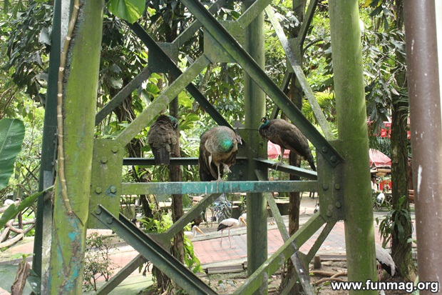 kl-bird-park-best-things-to-see-in-kuala-lumpur- (28)