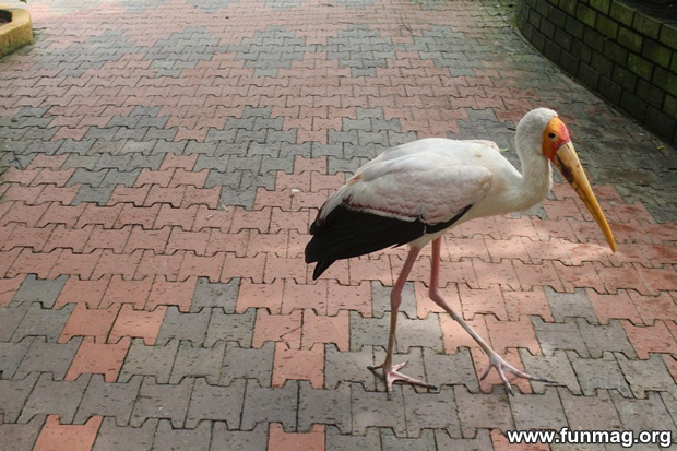 kl-bird-park-best-things-to-see-in-kuala-lumpur- (29)