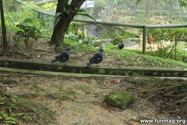 kl-bird-park-best-things-to-see-in-kuala-lumpur- (33)