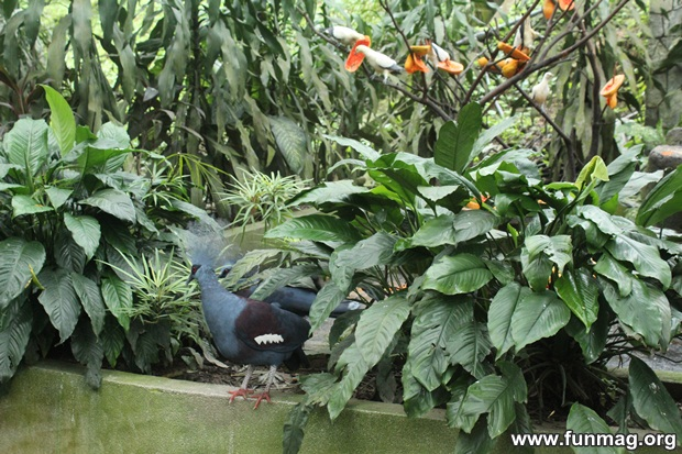 kl-bird-park-best-things-to-see-in-kuala-lumpur- (35)