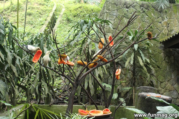 kl-bird-park-best-things-to-see-in-kuala-lumpur- (36)