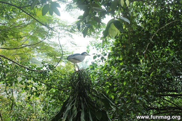 kl-bird-park-best-things-to-see-in-kuala-lumpur- (37)