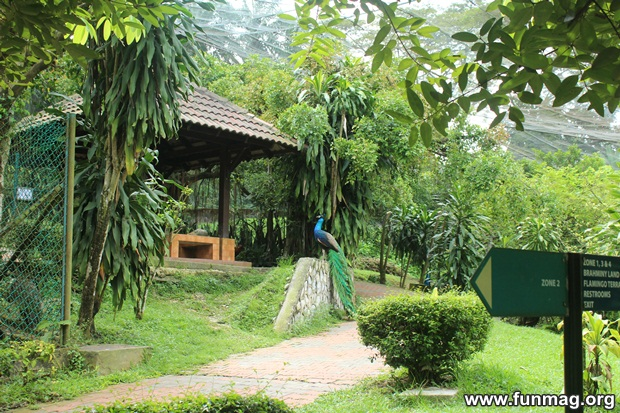 kl-bird-park-best-things-to-see-in-kuala-lumpur- (40)