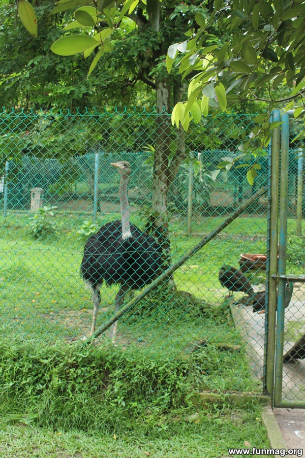 kl-bird-park-best-things-to-see-in-kuala-lumpur- (42)
