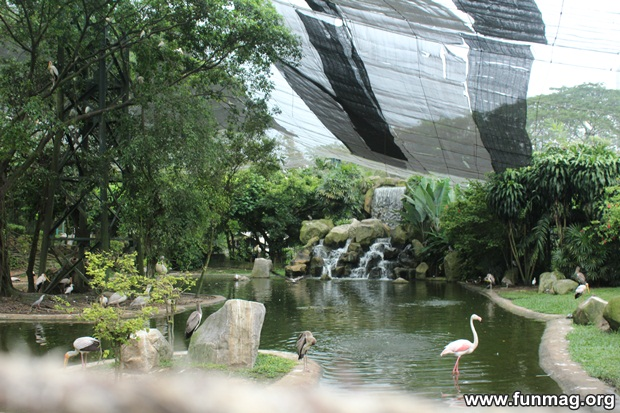 kl-bird-park-best-things-to-see-in-kuala-lumpur- (60)