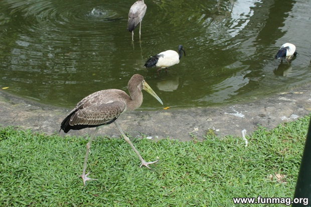 kl-bird-park-best-things-to-see-in-kuala-lumpur- (62)