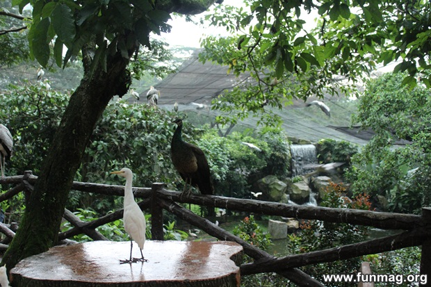 kl-bird-park-best-things-to-see-in-kuala-lumpur- (68)