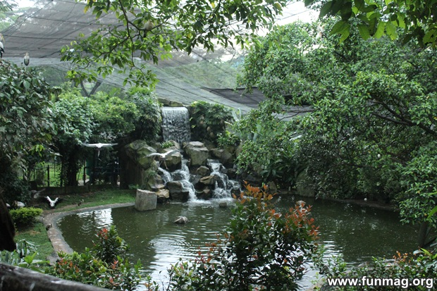 kl-bird-park-best-things-to-see-in-kuala-lumpur- (69)