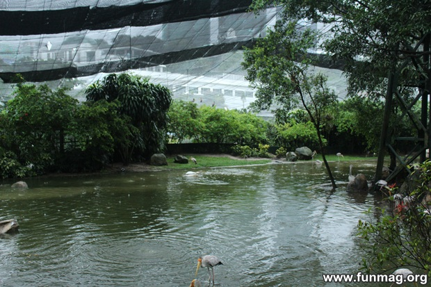 kl-bird-park-best-things-to-see-in-kuala-lumpur- (73)