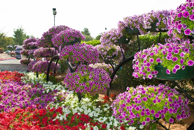 al-ain-paraidse-beautiful-flowers-park- (10)