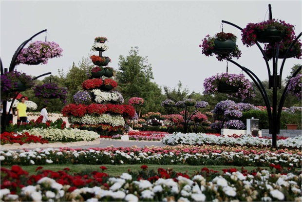 al-ain-paraidse-beautiful-flowers-park- (15)