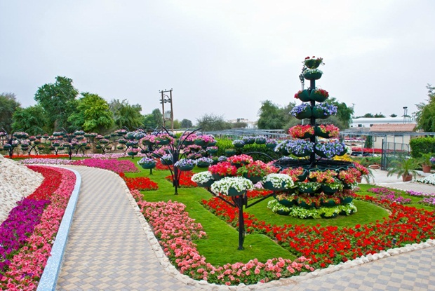 al-ain-paraidse-beautiful-flowers-park- (9)