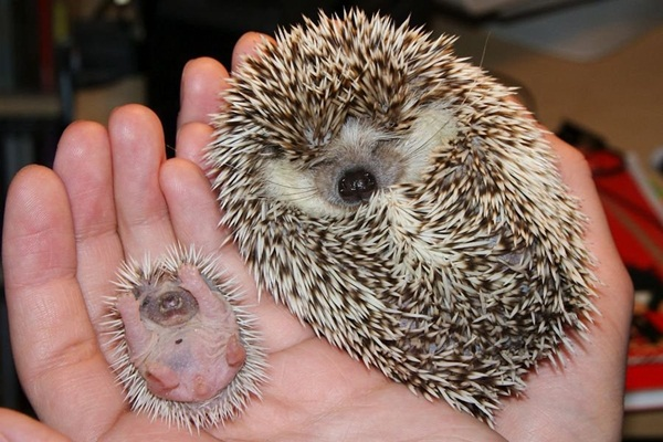 baby-animals-with-their-parents- (31)