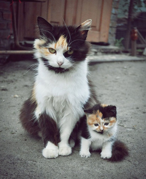 baby-animals-with-their-parents- (34)