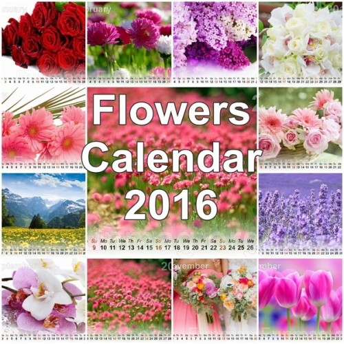 Beautiful Flowers Calendar 2016