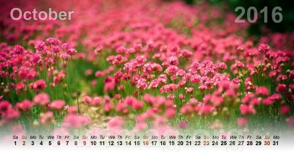flowers-calendar-2016- (10)