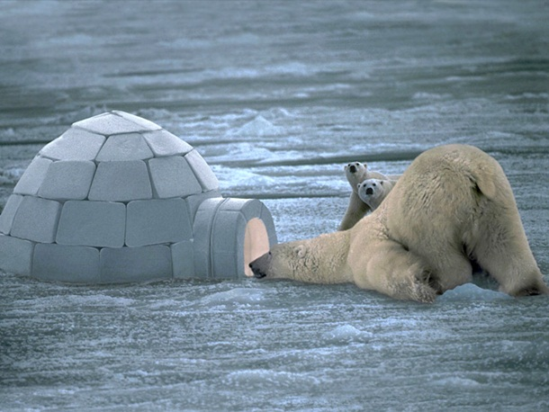 polar-bear-photos- (12)