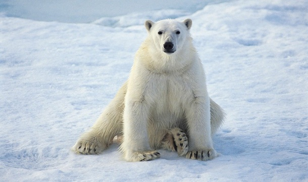 polar-bear-photos- (19)
