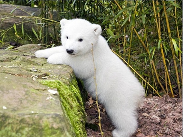 polar-bear-photos- (21)