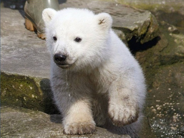 polar-bear-photos- (22)