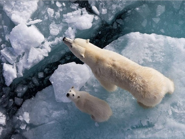 polar-bear-photos- (25)