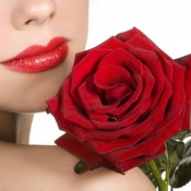 Irresistible Red Rose Flower (15 Photos)
