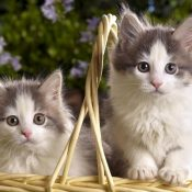 Cute Cats Wallpaper ( 20 Photos)