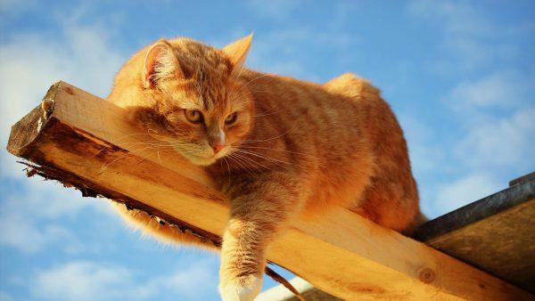 cute-cats-wallpaper-20-photos- (10)