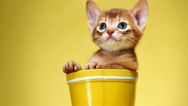cute-cats-wallpaper-20-photos- (11)