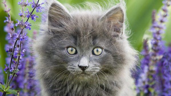 cute-cats-wallpaper-20-photos- (13)