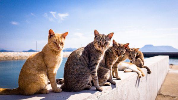 cute-cats-wallpaper-20-photos- (14)