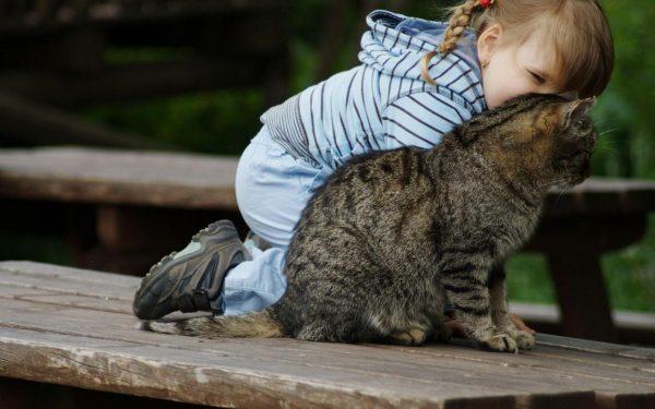 cute-cats-wallpaper-20-photos- (15)