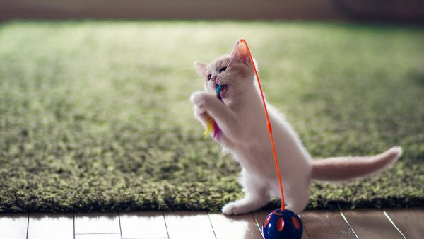 cute-cats-wallpaper-20-photos- (19)