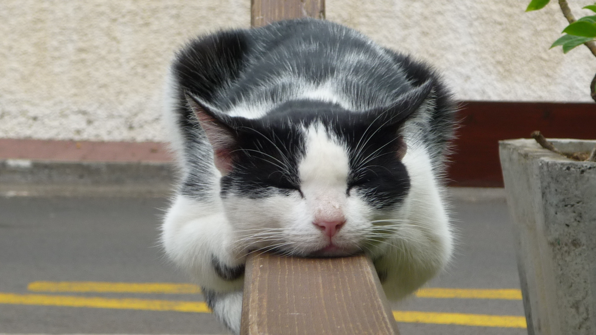 Funny Lazy Cat Pc HD Wallpaper, Background Image - AmazingPict.com