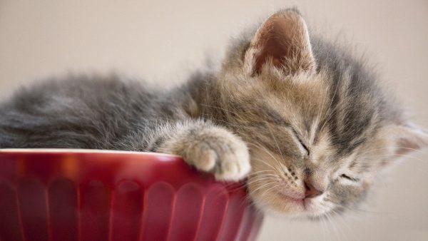 cute-cats-wallpaper-20-photos- (6)