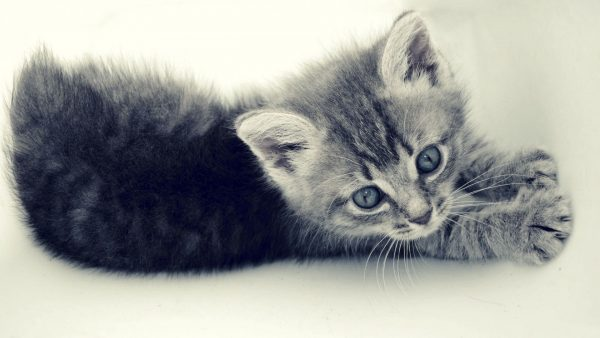 cute-cats-wallpaper-20-photos- (8)