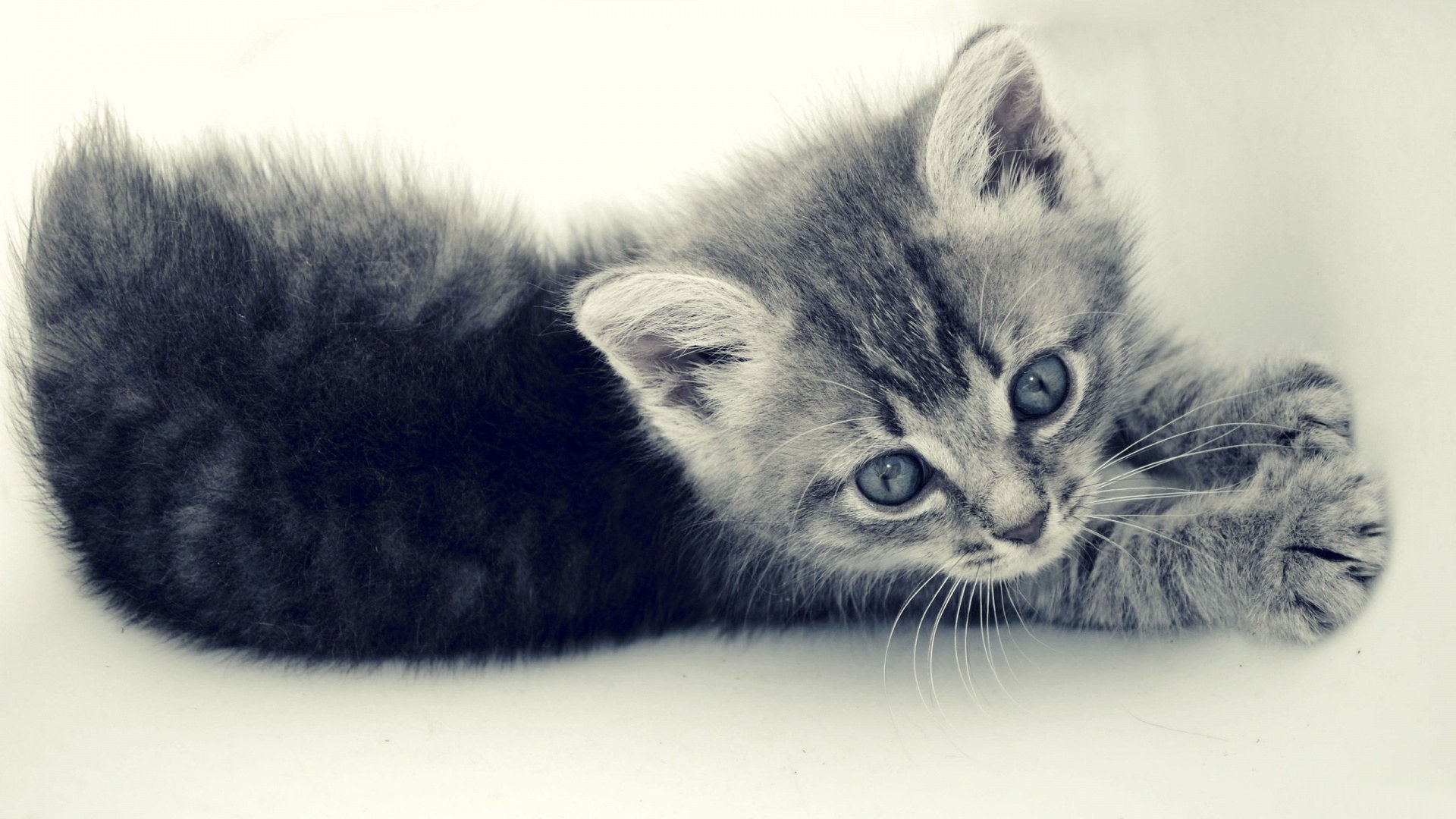 Cute Cats Wallpaper 20 Photos funmagorg