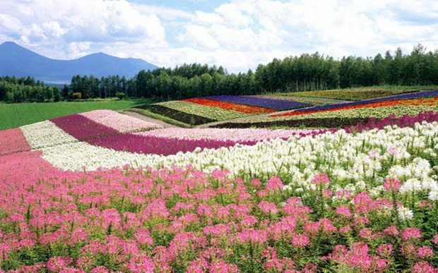 field-of-flowers- (13)