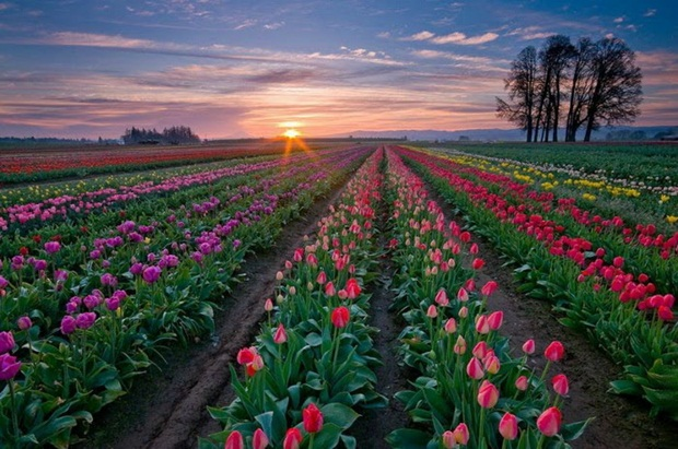 field-of-flowers- (18)