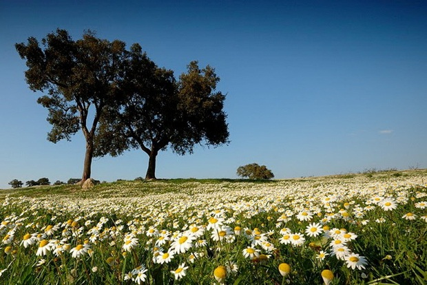 field-of-flowers- (19)