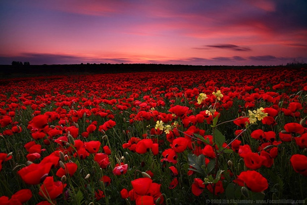 field-of-flowers- (21)