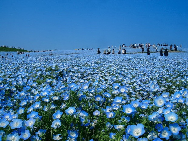 field-of-flowers- (23)