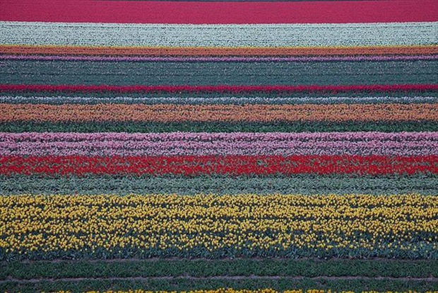 field-of-flowers- (25)